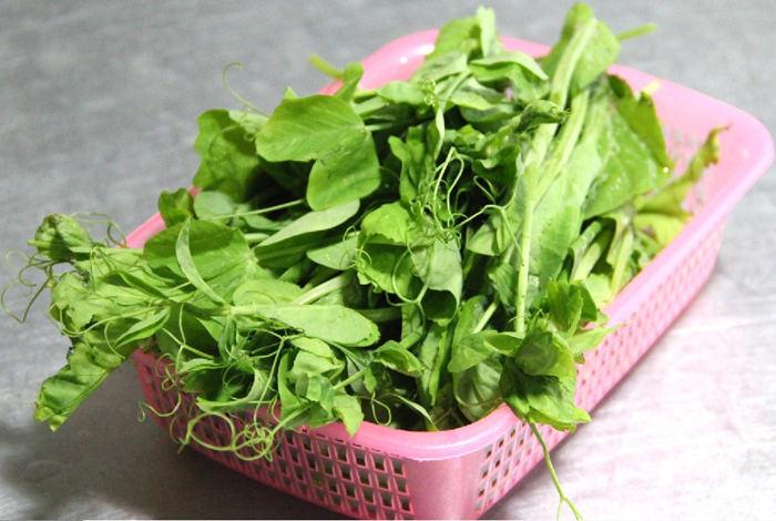 豌豆苗的营养价值及功效